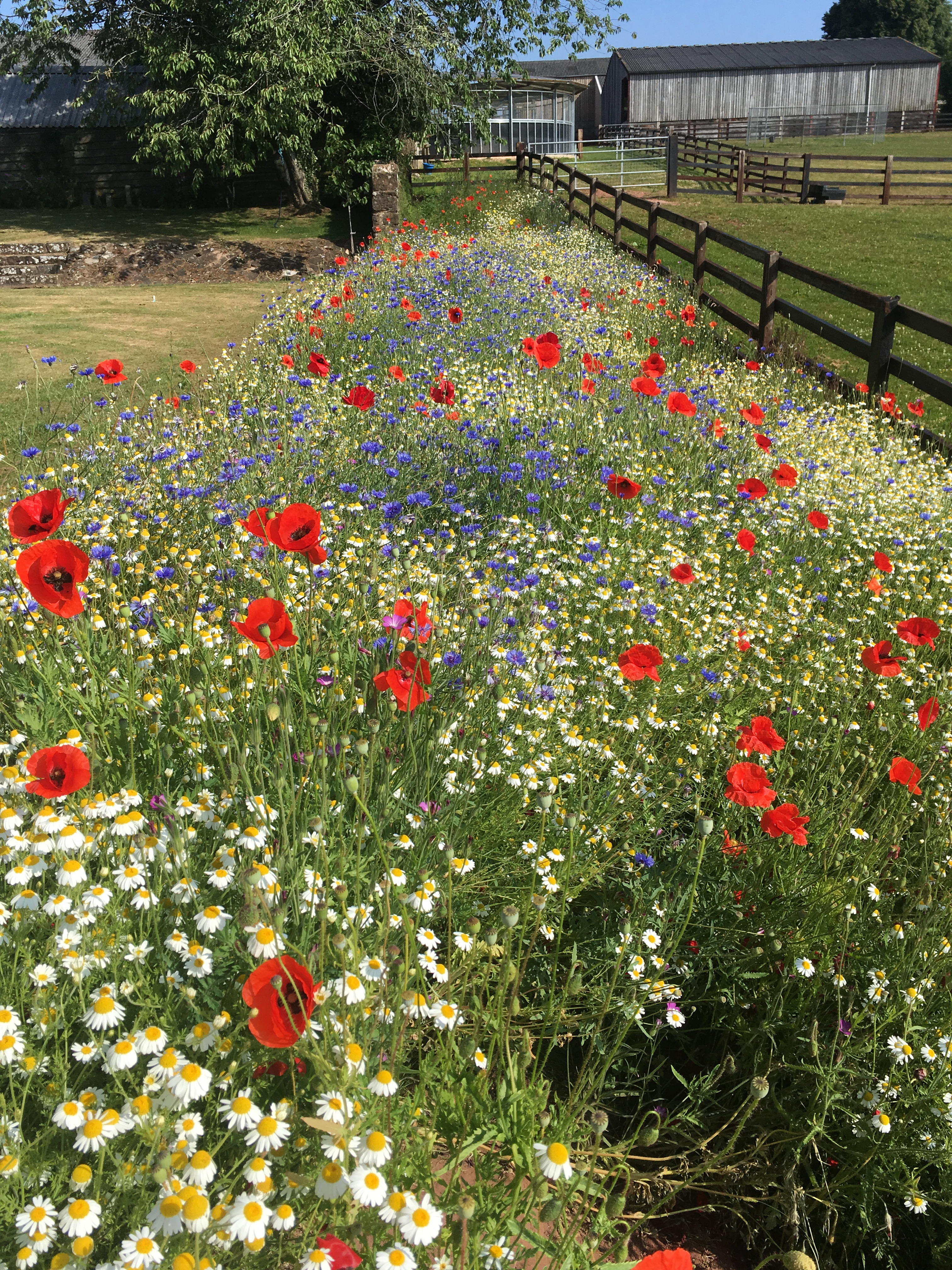Beautiful wildflower mini meadow on a Gloucestershire farm